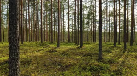 bird ecology : Aerial View of the Forest in Finland. Beautiful nature of Finland. Stock Footage