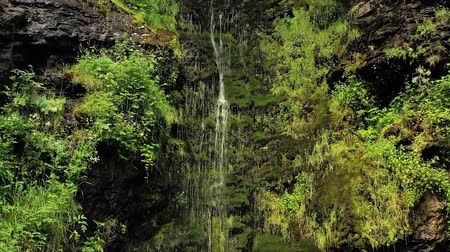 acalmar : Clean small waterfall in the forest. Beautiful Nature Norway natural landscape.