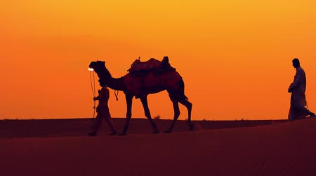 dune : Cameleers, camel Drivers at sunset. Thar desert on sunset Jaisalmer, Rajasthan, India. Stock Footage