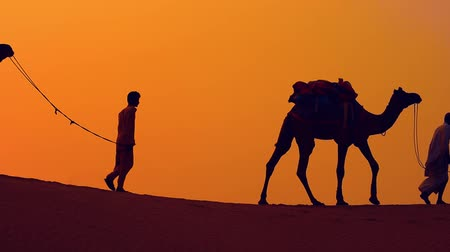 Cameleers, camel Drivers at sunset. Thar desert on sunset Jaisalmer, Rajasthan, India. Стоковые видеозаписи