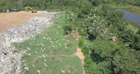 escavadora : Birds eye view of garbage mountain from drone in the industrial zone. Here is a flock of white birds, living in the garbage dump hill, The flock live in the forest near the garbage zone.