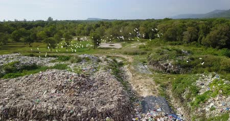 escavadora : Long take birds eye view of garbage mountain from drone in the industrial zone. See the employee take garbage to sell to earn extra income. Here is a flock of white birds, living in the garbage dump.