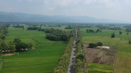 uzak : The high angle view  of  the line of threes  from a drone, can see  the street, fields and running cars on the road.