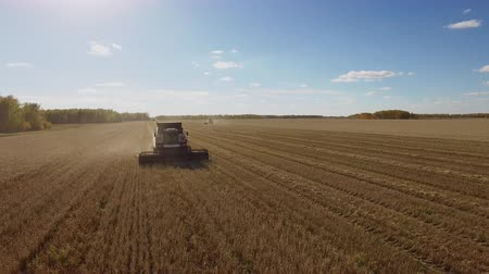 Beautiful harvest aerial view by quadcopter with harvester combine on the farm wheat field. Industrial agriculture harvesting, nature food production. Season farming at plant with moving machine