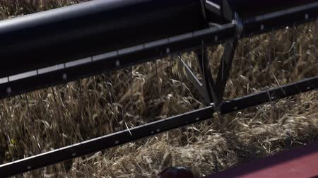 Industrial combine harvester blades cutting rye close up at farm field. Agriculture harvest technology equipment at autumn farmland. Farming business, harvesting season, thresher cut the ripe kernels