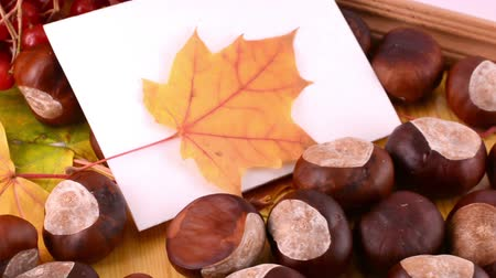 žalud : Autumn leaves, maple, viburnum, pine cone, acorn and nut on wooden texture background with empty copy space on photo frame