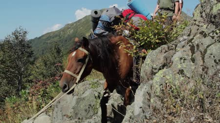 polowanie : heavy loaded horse climbing over a mountain range on hunting