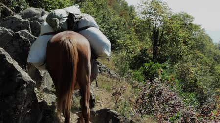 komutan : heavy loaded horse climbing over a mountain range  back view on hunting