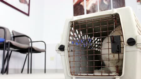 kotki : Sad Cat in cage at Vet Clinic waiting room V1