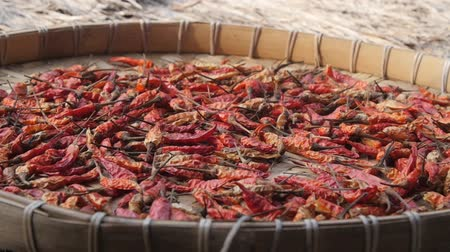 Panning across a tray of chili peppers drying in the sun Стоковые видеозаписи