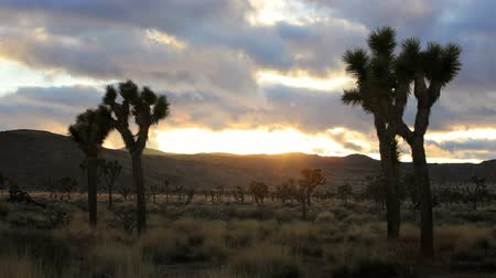 крайняя местности : Sunset at Joshua Tree National Park, time lapse