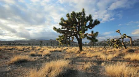 Калифорния : Landscape pan of Joshua Tree National Park