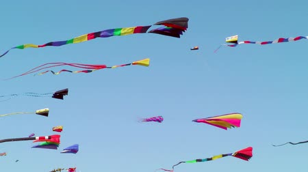 marco internacional : Kites flying against blue sky, Long Beach, Washington, USA Stock Footage