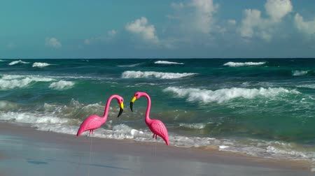 oceânico : Two plastic flamingos on Isabel Beach in Puerto Rico Stock Footage