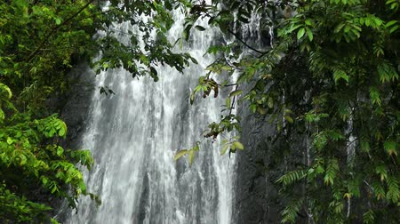 regenwald : Wasserfall in El Yunque National Forest, Puerto Rico Videos