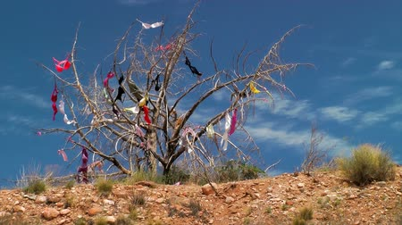 országúti : Dead tree covered in bras hung by travelers passing by, Utah