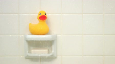 резина : Yellow rubber duck sitting on a soap dish in a shower Стоковые видеозаписи