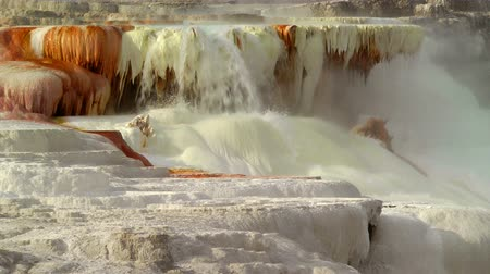 mammoet : Mammoth Hot Springs, Yellowstone National Park Stockvideo