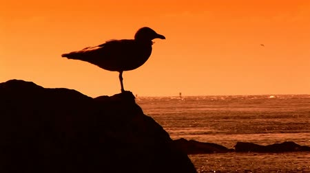 náutico : Sunset over the Pacific Ocean with a seagull taking flight in silhouette
