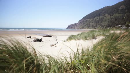 Manzanita Beach, spähen durch das Seegras Videos