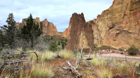 Smith Rock State Park, Oregon, Jib shot, fiori in primo piano