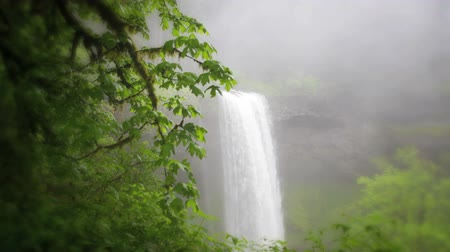 South Falls, Silver Falls State Park, Oregon. Dolly shot, comprende l'audio di alta qualità.