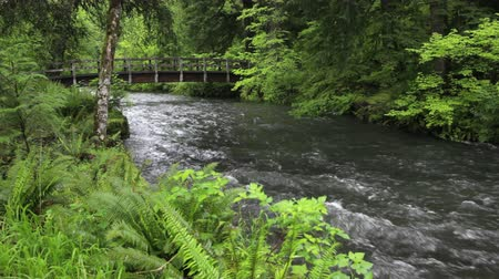 patak : Pedestrian bridge over Silver Creek, Silver Falls State Park, Oregon. Includes high quality audio.