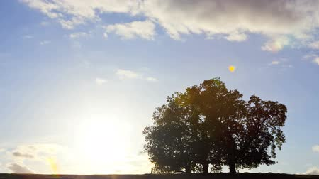 dub : Oak Tree in silhouette, sunset, time lapse and tilt