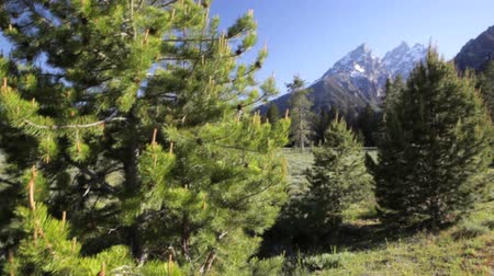 grand tetons : Grand Tetons National Park, jib shot Stock Footage
