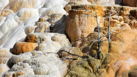 палитра : Zoom in of Palette Spring in the Mammoth Hot Springs area of Yellowstone National Park