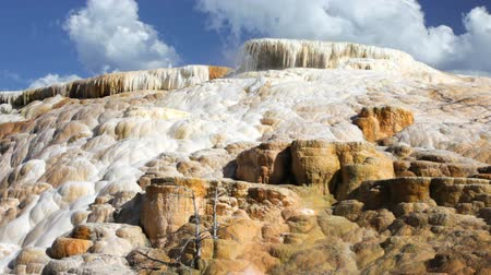 mammoet : Zoom in van Palet Lente in het gebied Mammoth Hot Springs van Yellowstone National Park