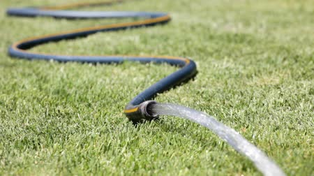 mangueira : Watering the lawn with a garden hose Stock Footage