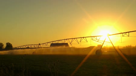 pulverização : Setting sun over crops being watered Stock Footage