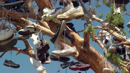 országúti : Random tree covered in discarded shoes, near Doyle, California