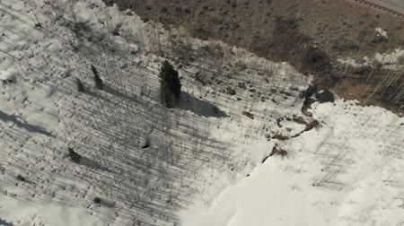 ilgi yeri : Aspen, United States - April 19, 2019: Drone shot of scenic landscape of the rocky mountains, forests and snowy back roads near Aspen Colorado Stok Video