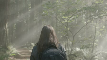 bolsa : Female photographer walking through the forest Stock Footage