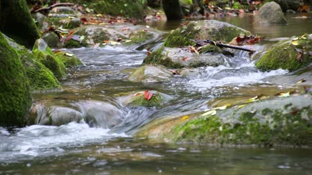 rainy : Creek Cascade with Fallen Red Leaves in Fall.  Fresh Mediterranean river cascades in Autumn rack focus. Beautiful and awesome winding creek. Mighty and meandering stream under the rain in Fall. Natural landscape of the Garrotxa, Girona. Stock Footage