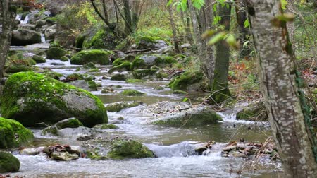 mocný : Mediterranean River Cascades in Autumn.  Beautiful and awesome winding creek through the trees. Mighty and meandering stream under the rain in Fall. Natural landscape of the Garrotxa, Girona. Dostupné videozáznamy