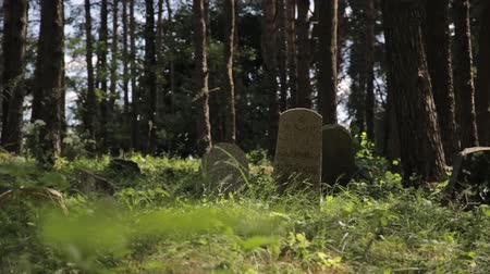 墓石 : Panning shot of abandoned islamic graveyard in the forest. Grass and trees grows over grave monuments in the woods