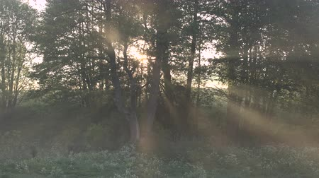 idílio : Beautiful morning scenery in the forest, with the sun casting sun rays of light through the mist and tree branches