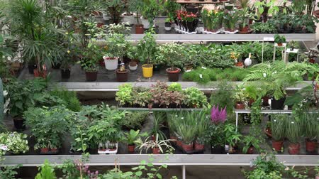 dispensary : Big variety of plants and flowers inside of botanic green house. Beautiful orangery full of decorative, rare, exotic plants and flowers for sale
