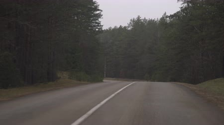 célere : Car driving on the road in nature on a cloudy day. Driving through pine forest landscape