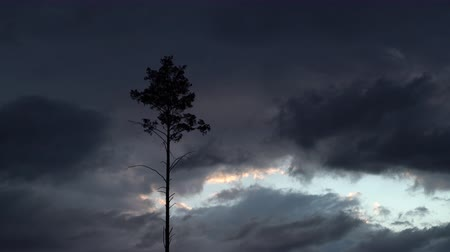 deşarj : Time lapse of moving rain clouds and a single isolated tree. Pine tree and dark storm clouds in the background. Silhouette of a tree with rainy backdrop Stok Video