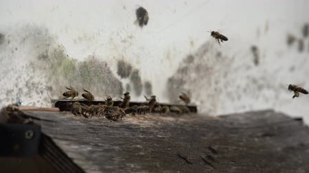worker bees : A lot of bees entering beehive with collected honey. Bees collecting nectar from flowers and putting into hexagonal cells after returning to bee hive