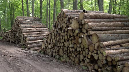 sawn : Area of illegal deforestation of vegetation in the forest. Cut the tree and wooden trunks from the forest. A pile of cut wood near the forest. Concept of forest felling, wood problem, ecology
