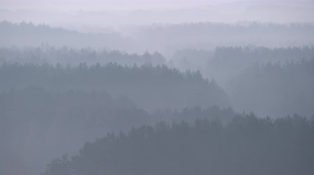 уменьшающийся : High altitude view of foggy forest diminishing in perspective. Mysterious atmosphere in nature landscape. Misty layers of trees