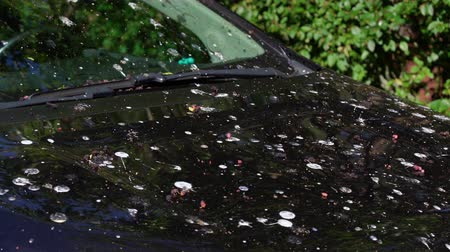 zanedbaný : Loads of bird poop on top of the car. Dark hood of the car and front window with lot of bird droppings. Bad parking, bad luck, car damage