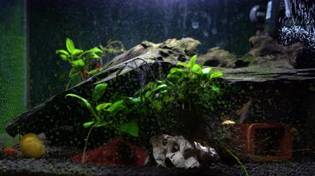 tlen : Small fish tank aquarium with colourful snails and fish at home. Fishbowl with freshwater animals