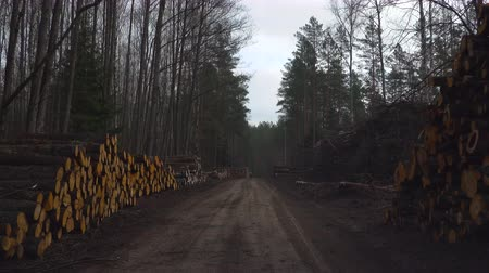 sawn : Driving through area of deforestation of trees in the forest. Piles of cut down trees on both sides of the road. A pile of cut wood near the forest. Ecology