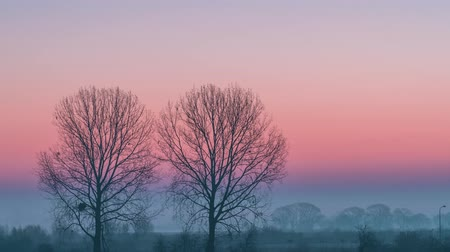 Minimalistic rural landscape with two trees, fog on a field. Colorful sunrise at sunrise time lapse.